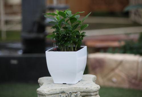 Kvetináč G21 Cube mini, 13.5cm, zelený