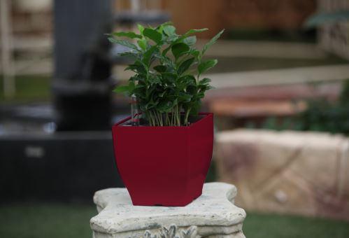 Samozavlažovací kvetináč G21 Cube mini červený 13.5cm