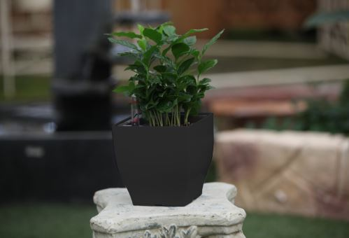 Samozavlažovací kvetináč G21 Cube mini černý 13.5cm